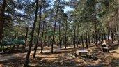 Balat Atatürk Ormanı