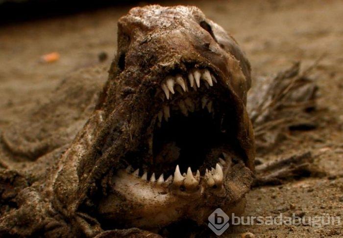 Dünyanın En Korkunç Ve Esrarengiz Hayvanları Foto Galerisi 8