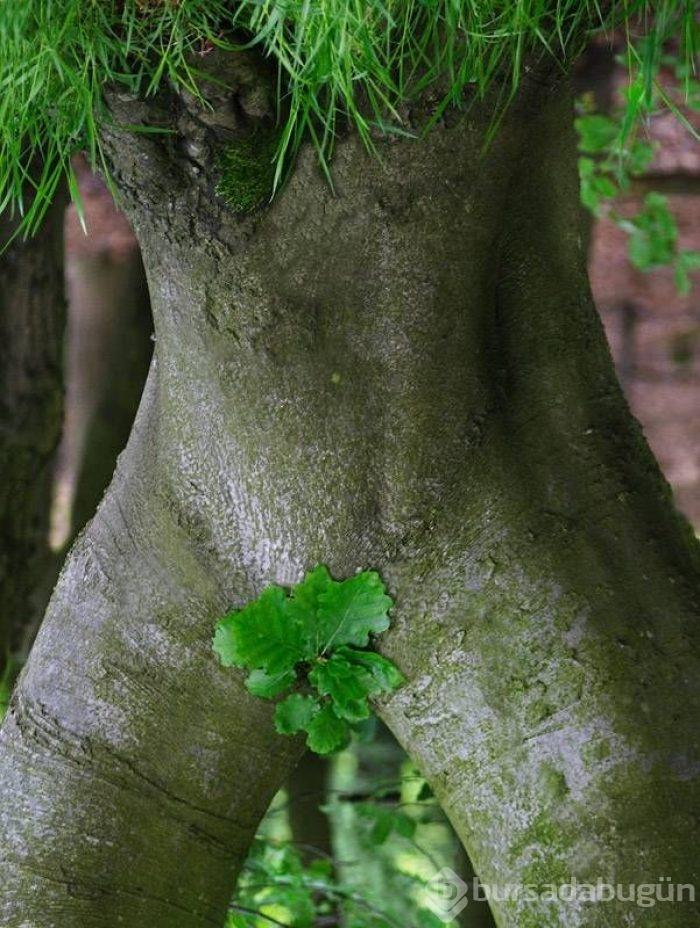 трахнул дерево фото - 6