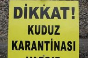 Diyarbakır'da kuduz karantinası