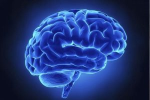 Uzun yaşamın sırrı beyinde