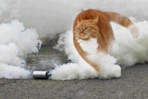 O kedi iyi, çünkü fotomantaj