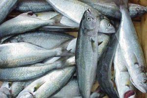 Küçük balık satan 20 işletmeye idari para cezası