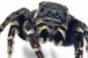 Keşfedilen örümcek türüne ünlü modacının ismi verildi