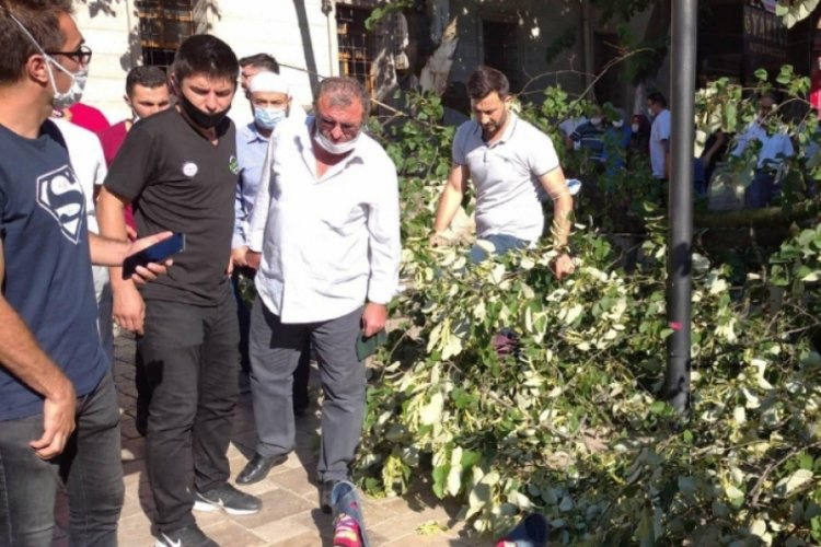 Zonguldak'ta üzerine ağaç düşen çocuk ölümden son anda kurtuldu