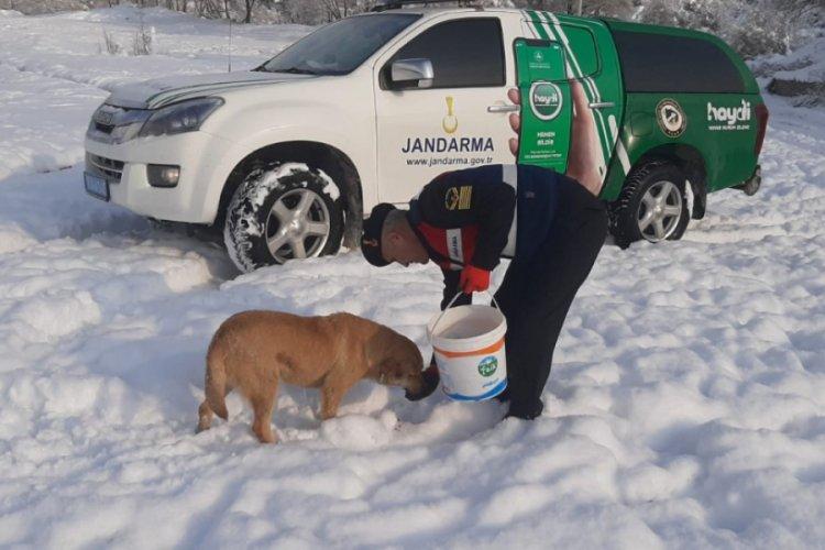 Bursa'da yaban hayvanlarına jandarma şefkati