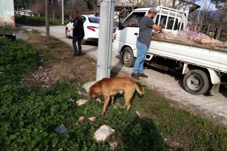 Bursa'da sokak hayvanları unutulmuyor