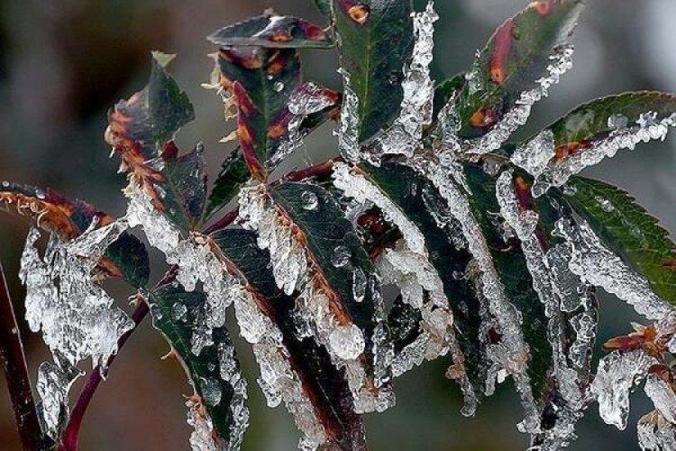 Bursalı çiftçilere zirai don uyarısı