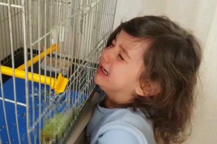 Bursa'da muhabbet kuşu ölen minik Defne'yi teselli etmek mümkün olmadı