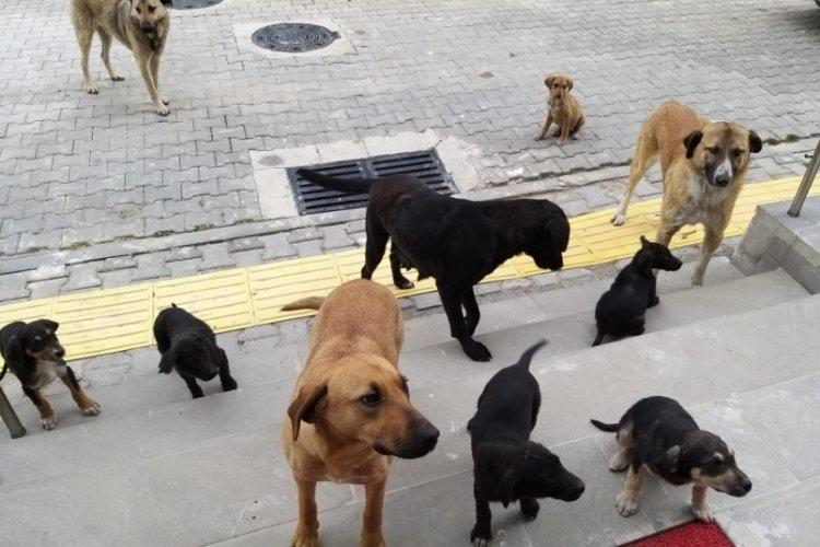Bursa Orhaneli'de sahipsiz köpekler toplandı