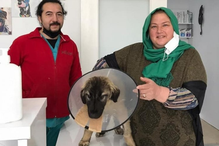 Bursa'da traktörün çarptığı köpeğin ameliyat masraflarını sigorta şirketi karşıladı