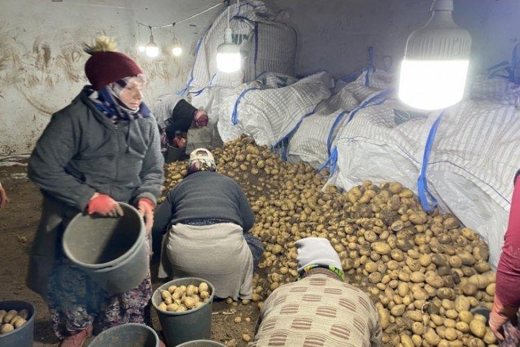Patates üreticileri hazırlıklara başladı