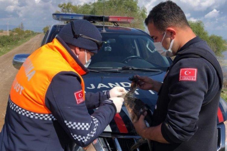 Bursa'da ağa takılan kuşu jandarma ekibi kurtardı