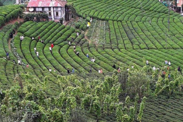 'Çay tarlasına giden vatandaşlara ceza yazılıyor' iddiasına yanıt