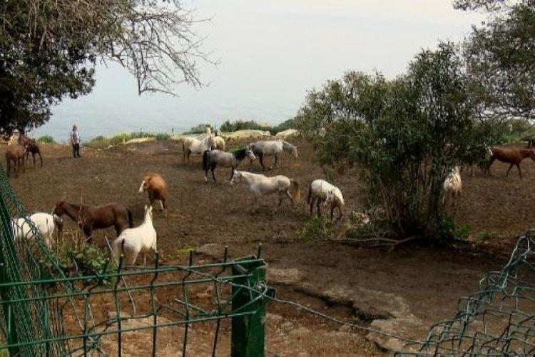 Kayıp atların çiplerini çıkardığı iddia edilen kişinin evinde inceleme