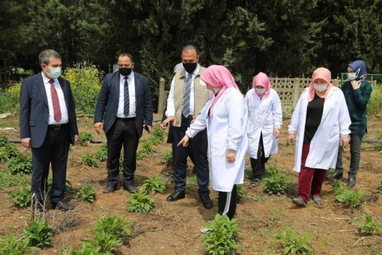 Bursa İl Tarım ve Orman Müdürü Aygül, ekinezya üreten kadınlarla bir araya geldi