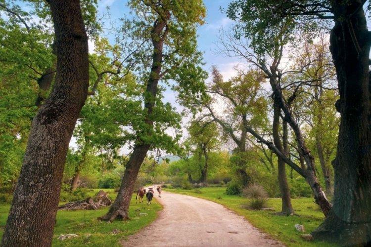 Bursa Karacabey longoz ormanları renklendi