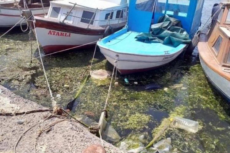 Deniz salyası tehlikesi bitmeden sahiller 'deniz marulları' ile kaplandı