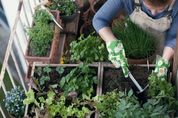 Bursa Uludağ Üniversitesi'nden balkon sebzeciliği tavsiyesi