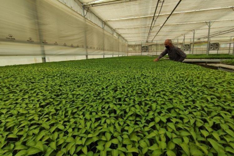 Bursa'da milyonlarca sebze fidesi elde kaldı