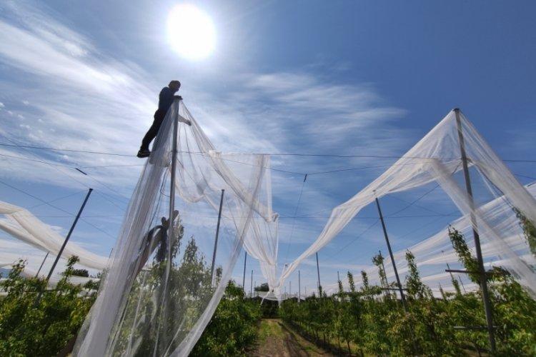 Bursa'da çiftçiler ürünleri doludan korumak için yüz binlerce liralık ağ çekiyor