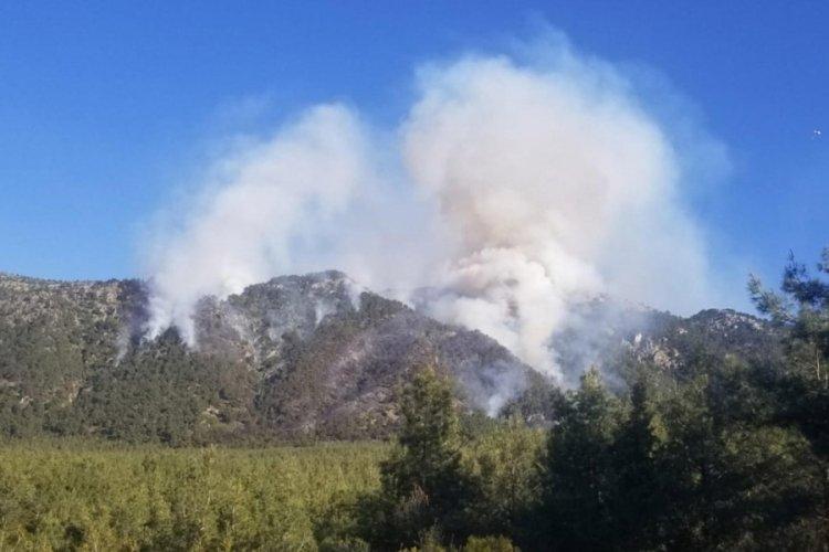 Denizli'deki orman yangını mangaldan çıkmış