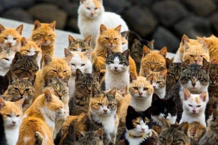 Fare istilasına karşı 1000'den fazla kedi görevlendirildi