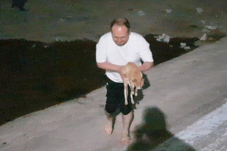 Bursa'da gölete düşen kediyi boğulmaktan kurtardı
