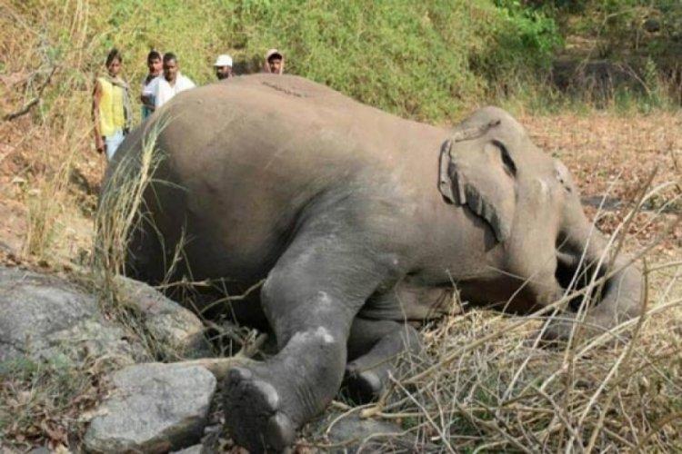 Hindistan'da yıldırım düşmesinin ardından 18 fil ölü bulundu