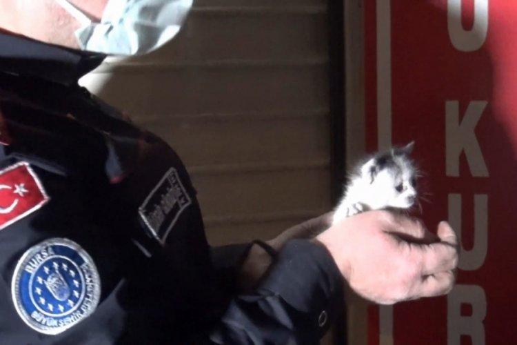 Bursa'da reklam panosuna sıkışan yavru kedileri kurtarmak için seferber oldular