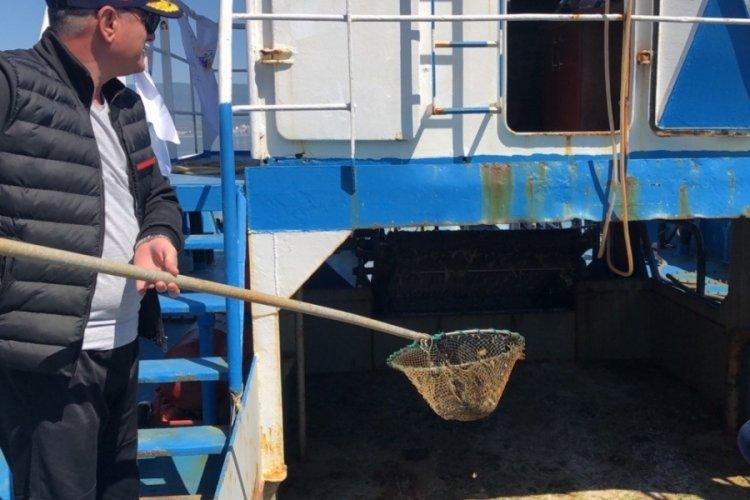 Bursa Gemlik Körfezi'nde plankton temizliği başladı