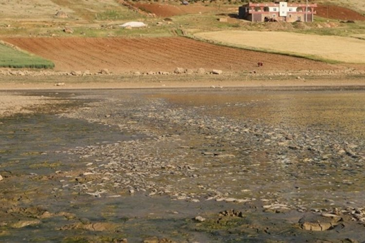 Mardin'deki toplu balık ölümlerinin nedeni belli oldu