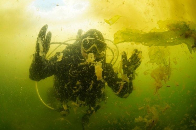 Bursa'da deniz salyası su altını da sardı