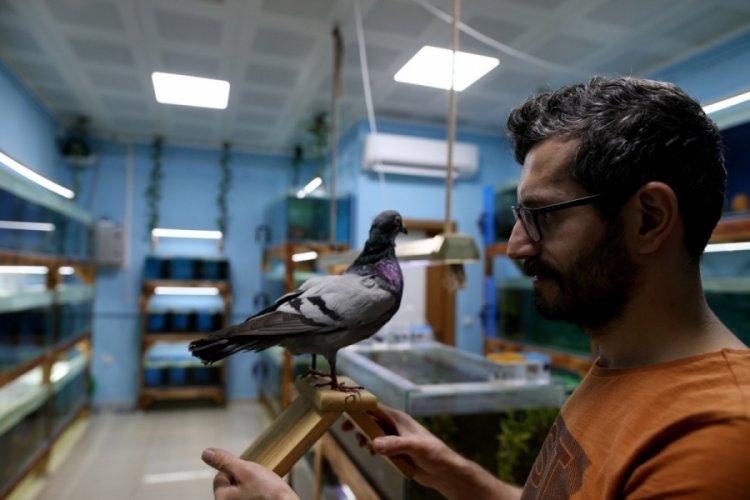 Bursa'da 18 yıldır gözü gibi baktığı kuşu ölünce dondurdu!