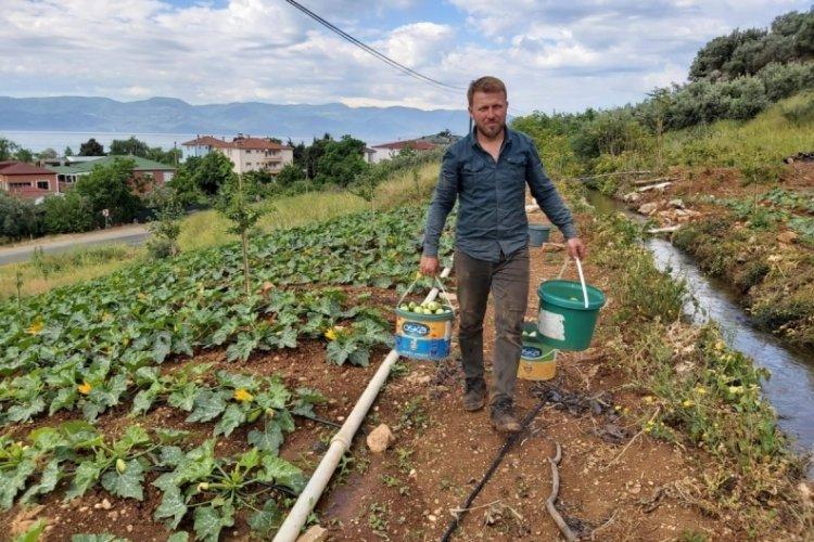 Bursa'da kabak hasadı başladı, çiftçi fiyatlardan memnun