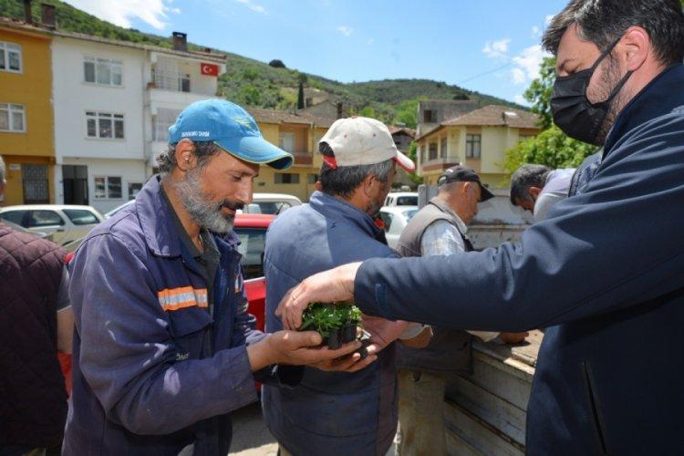 Bursa Gemlik'te binlerce domates fidesi dağıtılıyor