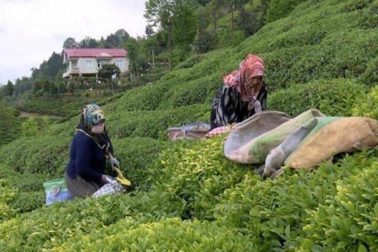 Çay göçü ile gelen 30 bin kişiye uyarı