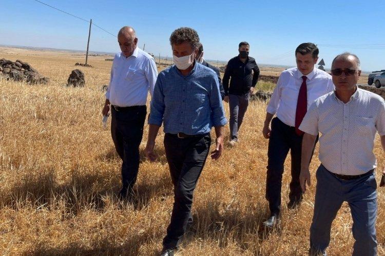 Bursa Milletvekili Sarıbal: Buğday alım fiyatı arttırılmalı
