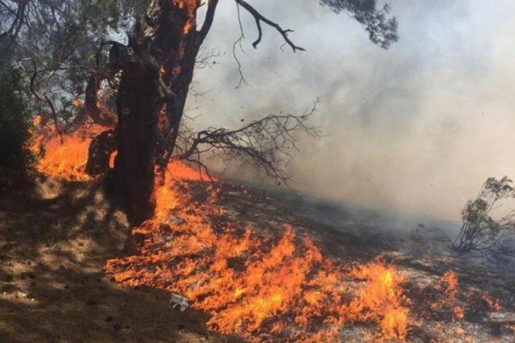 Antalya'da nitelikli doğal koruma alanı Lara ormanında yangın