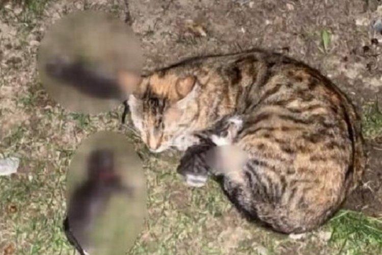 Sitede kürekli dehşet: 3 yavru kediyi öldürdüler