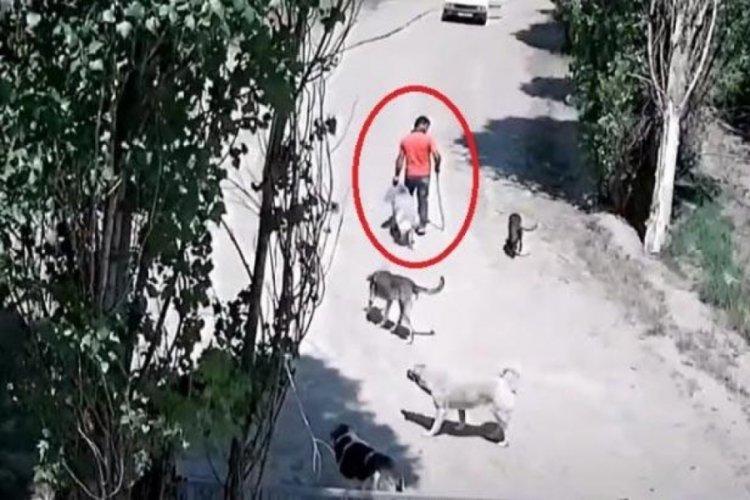 Mide bulandıran köpeğe tecavüz iddiası!