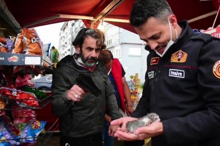 Bursa'da kayalıklara sıkışan yavru kediler el birliği ile çıkarıldı