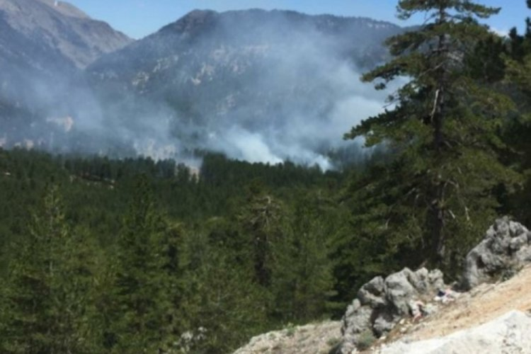 Alanya'da ormanlık alandı yangın