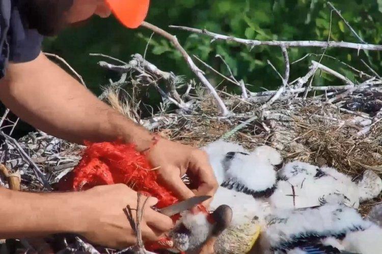 Bursa'da Yaren leyleğin yavruları kangren olmaktan kurtarıldı