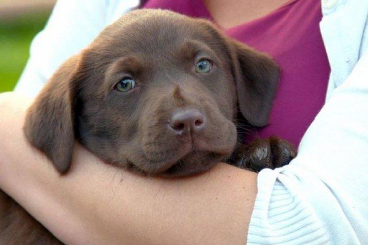 İnsanlar gibi köpeklerin de ömrünü uzatma için çalışmalar başladı