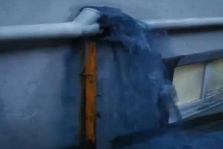 Mavi su bu kez iş yerlerine aktı: Sokak köpekleri içip ölüyor