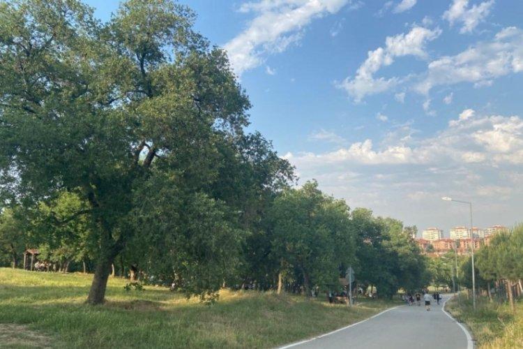 Bursa Balat Ormanı'nda böcek istilası (ÖZEL HABER)