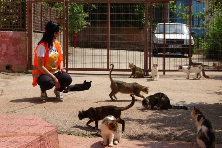 Bursa'da sokakta bulduğu sakat kedilere annelik yapıyor