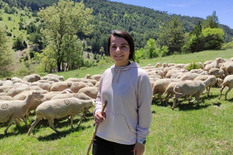 Bursa'da koyunlarını otlatarak Avrupa Şampiyonası'na hazırlanıyor