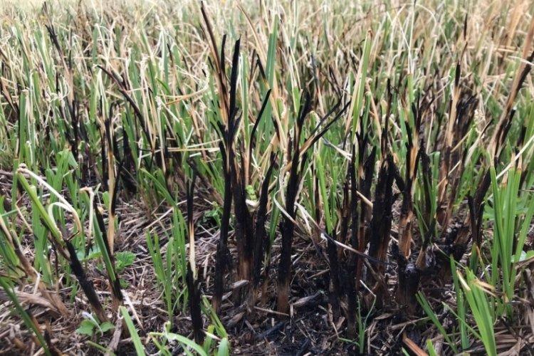 Turba bataklığında 'kuraklık ve kirlilik' tehdidi